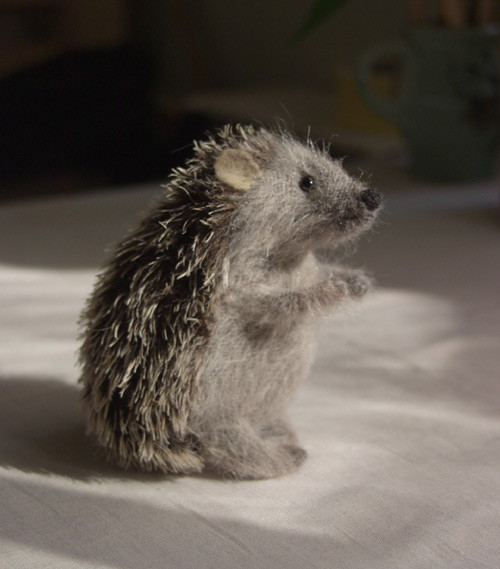 shaggy hedgehog