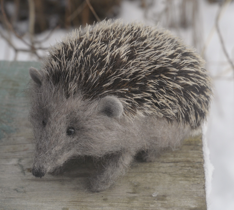 nosey hedgehog