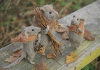 stuffed grey autumn mice