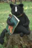 stuffed cat reading a book