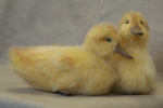 stuffed yellow ducklings
