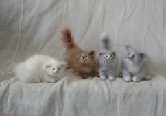 миниатюрные котята (вязаные)