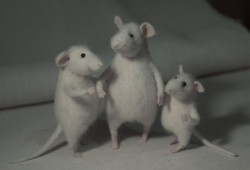 """mouse friends"""