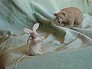 войлочные медведь и заяц (валяние)
