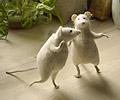 крыски танцуют