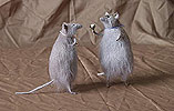 крысы - авторские игрушки